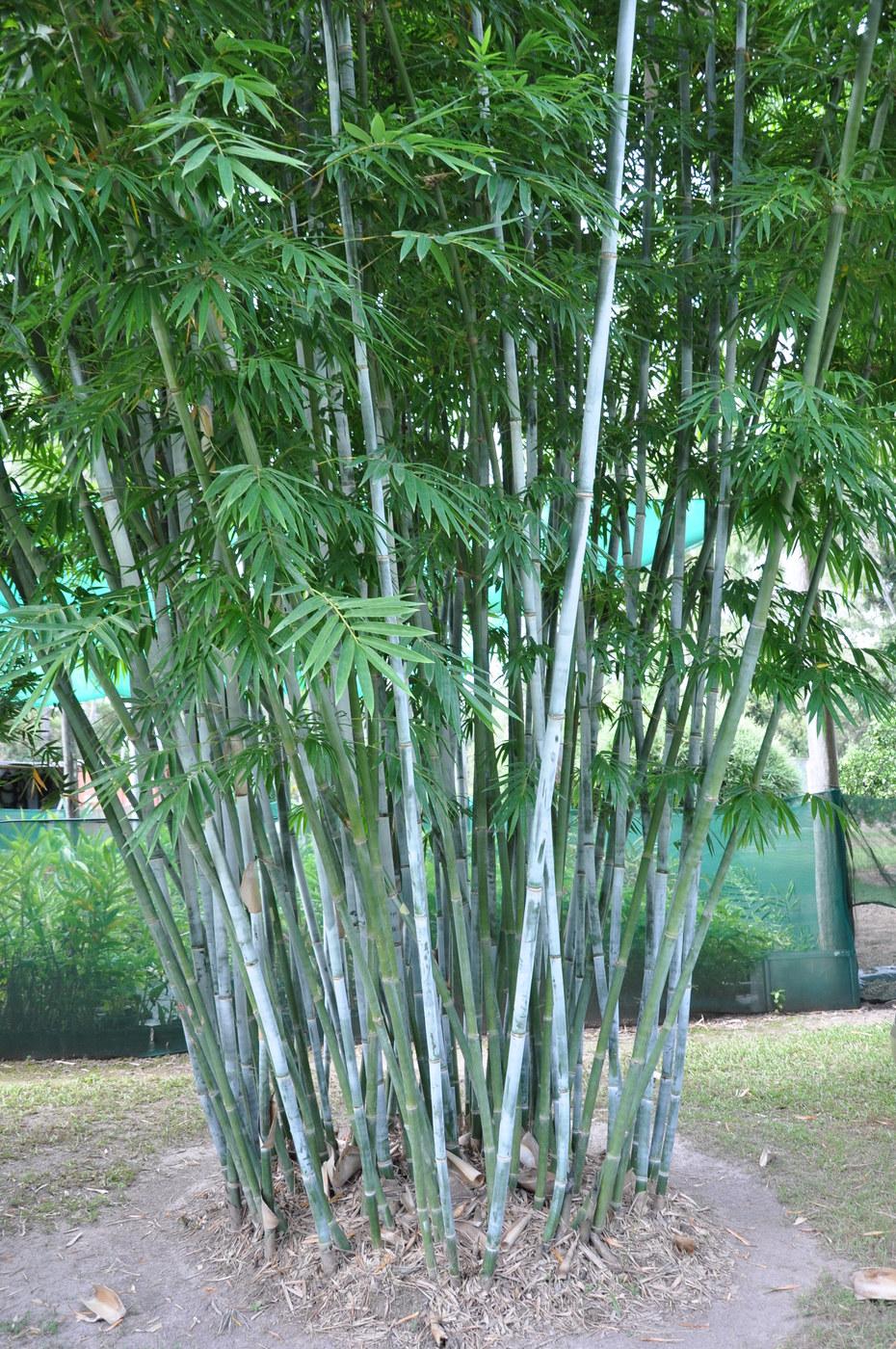 Bamboo Shade Outdoor