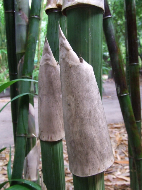 Useful Info About bamboo