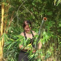Preparing bamboo for propagation